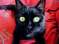 black kitty with big green eyes