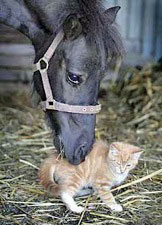 Kitty and horse