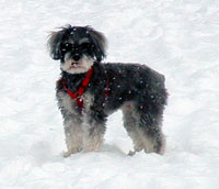 Lucy in the snow ~ Wishing you a Happy New Year