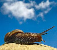 flickr-Snail & Sky