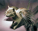 Taxidermy kitten with wings