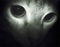 spooky cat eyes