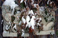 Winter Eve-Eve plaque in snow