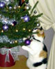Ditto inspects the tree