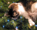 Iris decorates the tree